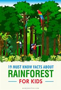 19 Must Know Rainforest Facts For Kids | Kids reading ...