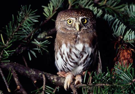 owl oregon zoo