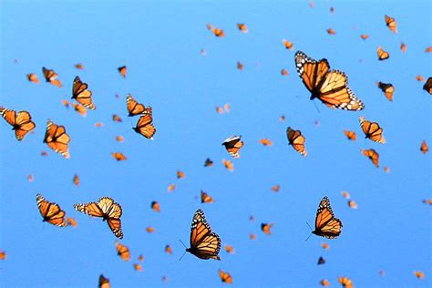 change is coming vandenvogue butterfly photos