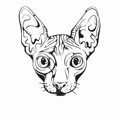 Cat Drawing Egyptian Sphynx Clipartmag
