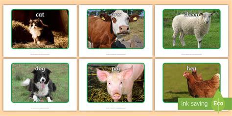 farm animal display  farm animals display