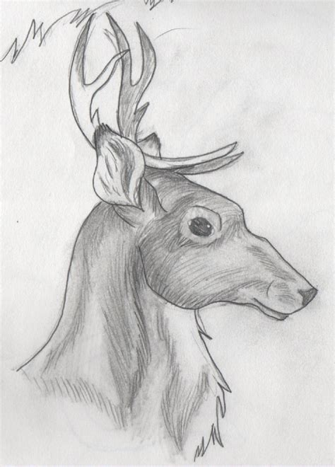 pictures cool drawings  animals drawings art gallery