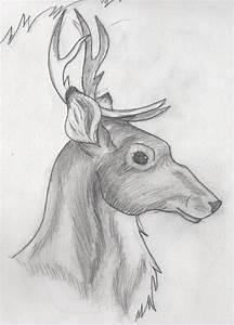 Gallery: Cool Drawings Of Animals, - Drawings Art Gallery