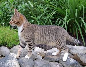 Pics For > Gray Tabby Kitten Outside