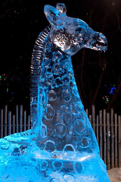 zoo lights denver zoo