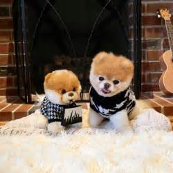Boo Cutest Dog Stuffed Animal