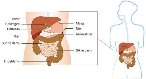 lever ontgiften symptomen