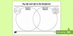 My Life And Life In The Rainforest Venn Diagram Worksheet