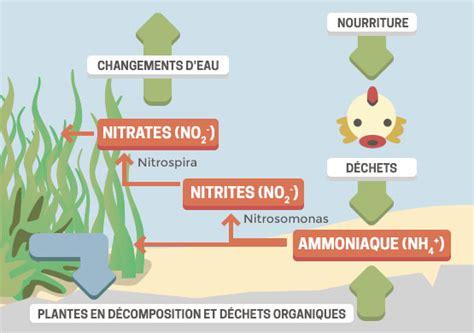 chambre de commerce rochefort aquarium cycle de l azote 28 images bact 233 ries eau