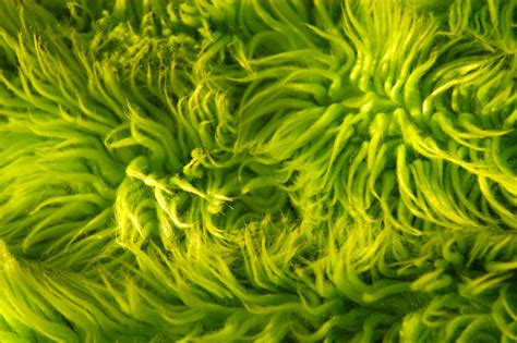 Lime Shag Rug lime green shag rug texture this is free to use as a