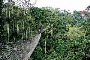 Kakum National Park - Wikipedia