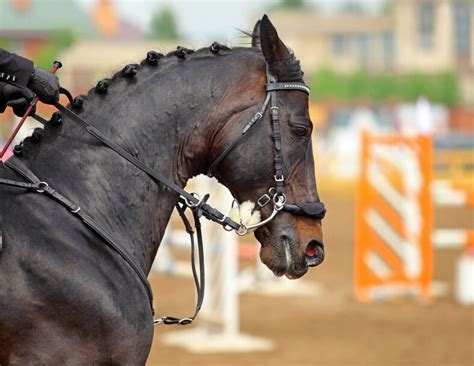 hackamore bridle horses riding using different horse bit english halter traditional would