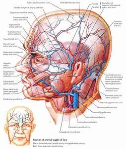 Labeling  Deep Facial Vein Drainage