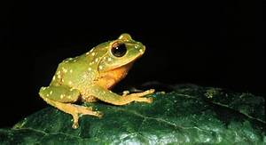 Odd sound of frogs croaking   Irish Examiner