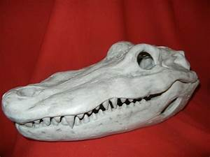LIFESIZE ALLIGATOR / CROCODILE SKULL HALLOWEEN HORROR PROP ...