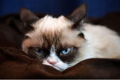 Cat Grumpy Meme Desktop Wallpapersafari