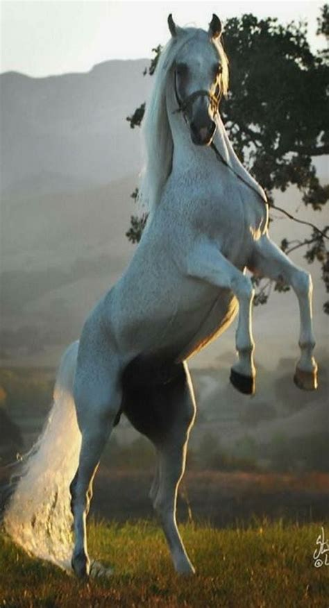 Pin by Mymy Willis on Horses   Horses, Horse breeds, Horse ...