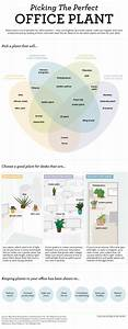 Pick The Right Office Plant For Your Environment With This