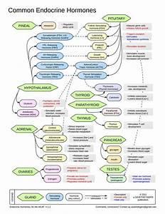 Common Endocrine Hormones