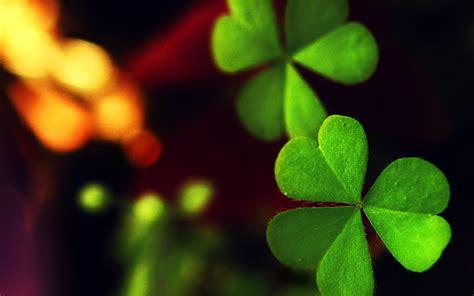 green leaves - HD Desktop Wallpapers | 4k HD