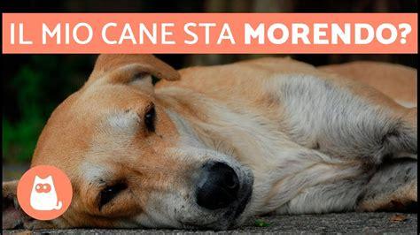 capire che il cane sta  morire  sintomi