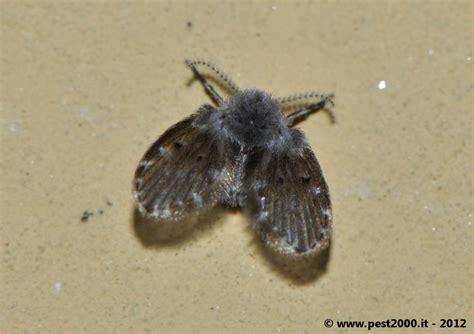 insetti neri volanti insetti neri volanti 28 images infestazione insetti
