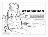 Groundhog Coloring Fun Activity sketch template