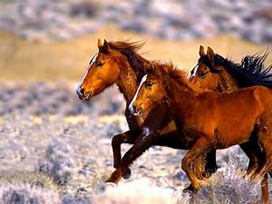 Facts About Mus... Free Horses Quotes