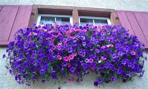 fiori in terrazzo fiori da balcone pieno sole con 10 fiori e piante da