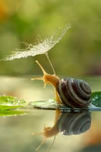 Amazing Snail with Umbrella