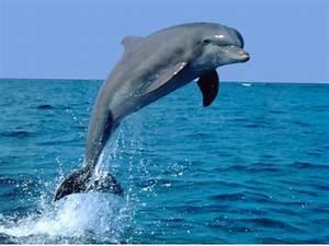 Schöne Delfin Bilder : bild delfin delfine wiki fandom powered by wikia ~ Frokenaadalensverden.com Haus und Dekorationen