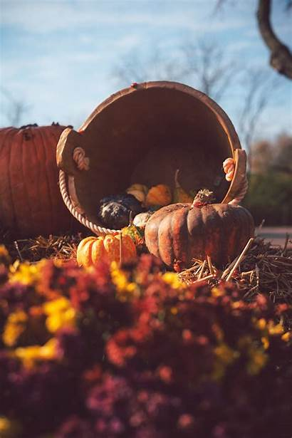 Pumpkin Straw Basket Harvest Autumn Background