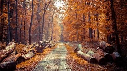 4k Autumn Wallpapers