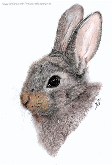 baby bunny  coloured pencil art examples