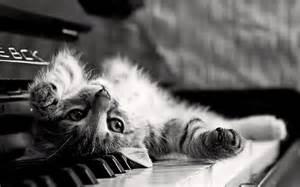 piano cat piano cat by kamysweet on deviantart