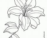 Lily Coloring Easter sketch template