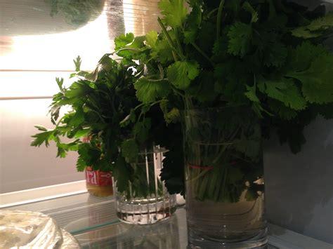 bien dans ma cuisine conserver ses herbes aromatiques le conseil ultime bien