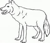 Coloring Wolf Printable Gray sketch template