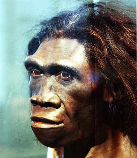 homo erectus adult female head model smithsonian museu