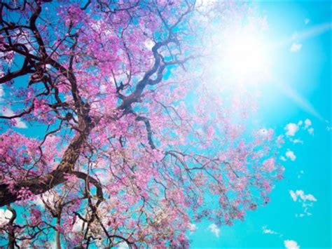 beauty spring   backgrounds   powerpoint