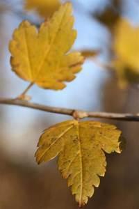 Stockrosen Blätter Haben Löcher : bl tter im herbst warum fallen sie sch pfung ~ Lizthompson.info Haus und Dekorationen
