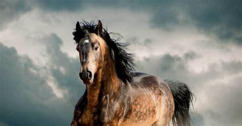 horse kind quiz horses