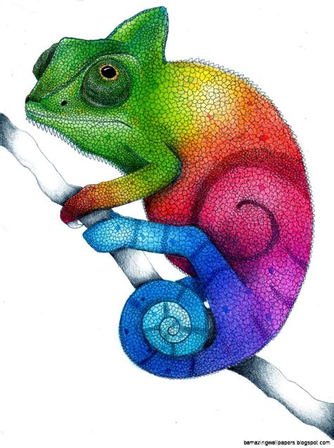 cameleon clipart rainbow pencil and in color cameleon