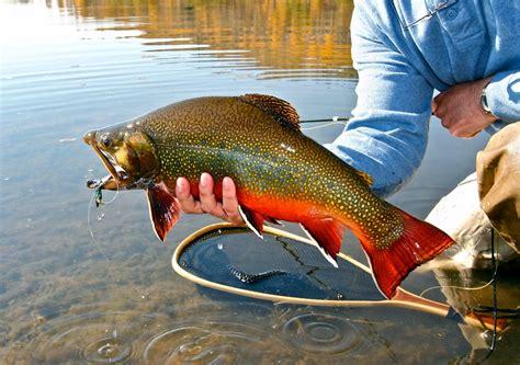 A Big Streamer For Big Fish