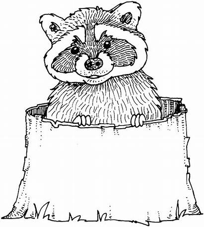 Raccoon Coloring Pages Printable Taco Raccoons Stump