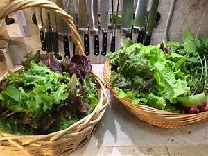 11 Tips for Growing Lettuce Indoors In Containers | Gardenoid