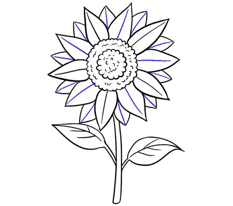 draw  sunflower easy step  step drawing guides