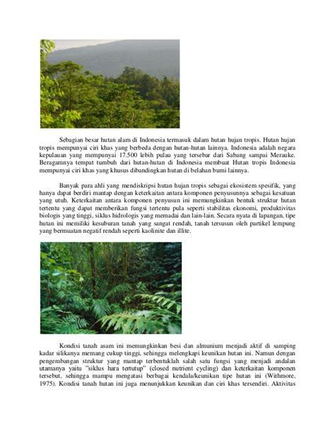 Angin bertiup menjadi lebih kencang. Berikut Ciri Ciri Hutan Hujan Tropis Sebagai Paru Paru Dunia Adalah - Ini Cirinya