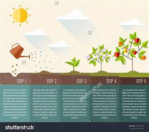 Image Result For Planting Rice Infographic