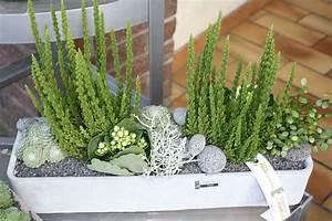 Plantes D Ombre Extérieur : les floralies d 39 anchin plantes ext rieur ~ Melissatoandfro.com Idées de Décoration